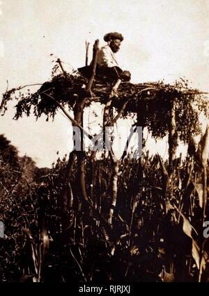 Village Chowkidar (veilleur de nuit), dans un arbre, dans un village rural indien vers 1930 Photo Stock