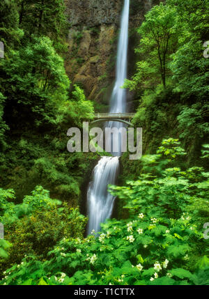 Multnomah Falls, en Oregon. Photo Stock