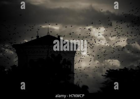Flock of birds flying passé building at night avec les nuages de tempête dans l'arrière-plan. Photo Stock