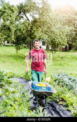 Farmer pushing wheelbarrow dans ferme bio Photo Stock