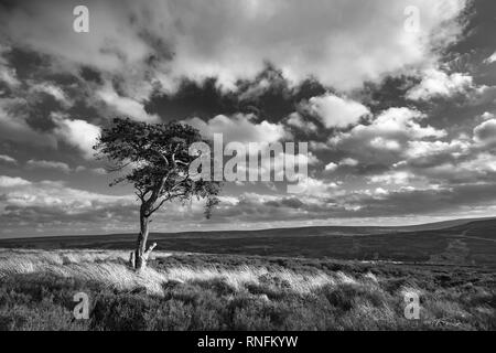 Au-dessus de Pine Tree, Commondale North York Moors National Park Photo Stock