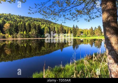 En été, le Pian di Gembro Réserver, Aprica, Alpes Orobie, Valtellina, Lombardie, Italie, Europe Photo Stock