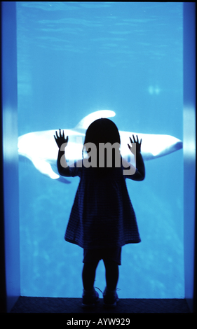 Silhouette d'une jeune fille regardant un poisson de verre aqualium Photo Stock