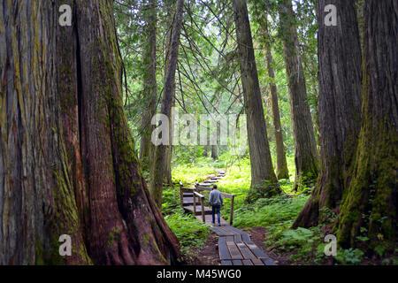 Forêt ancienne, Prince George, Colombie-Britannique Photo Stock