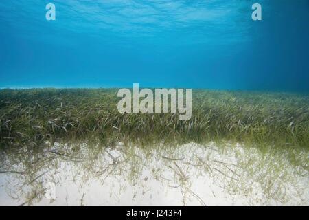 Sous-vue de les herbiers bed Photo Stock