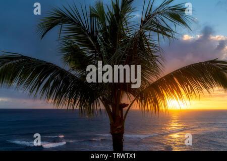 Palmier et le coucher du soleil. Piopu, Kauai, Hawaii Photo Stock