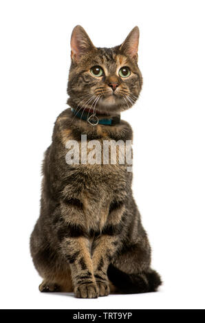 Mixed breed cat sitting in front of white background Photo Stock
