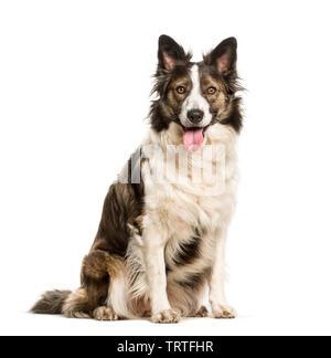 Mixed breed dog sitting against white background Photo Stock