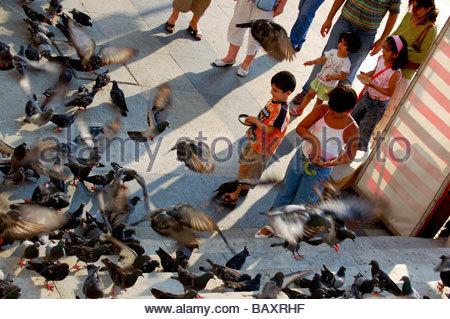 Les pigeons EN FACE DE YENI CAMI OU LA NOUVELLE mosquée à Istanbul TURQUIE Photo Stock