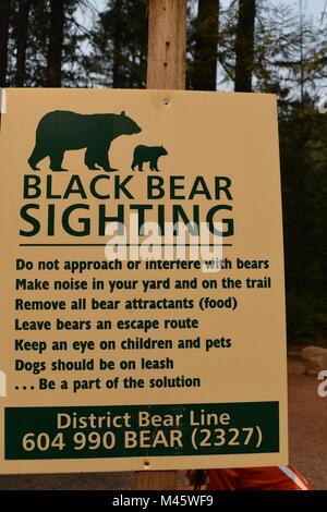 Alerte à l'ours noir Lynn Canyon Park, Vancouver, Canada Photo Stock
