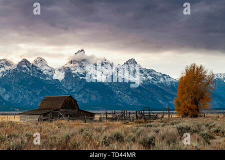 Mormon Row et Teton Range, Parc National de Grand Teton, Wyoming, États-Unis d'Amérique, Amérique du Nord Photo Stock