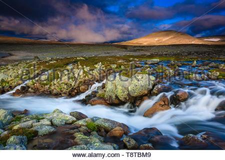 Tôt le matin dans la lumière incroyable parc national de Dovrefjell, Dovre, la Norvège. Photo Stock