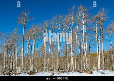 Aspen - Sud de l'Utah hiver Montagne Photo Stock