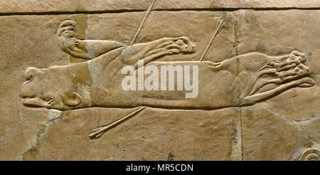 Mur assyrienne relief représentant le lion royal hunt. L'assyrien, environ 645-635 BC de Ninive, Palais du Nord. Photo Stock