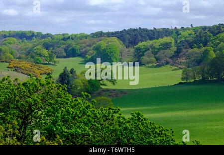 Sheringham Park, North Norfolk, Angleterre Photo Stock