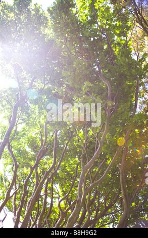 Soleil à travers les branches d'arbres Photo Stock