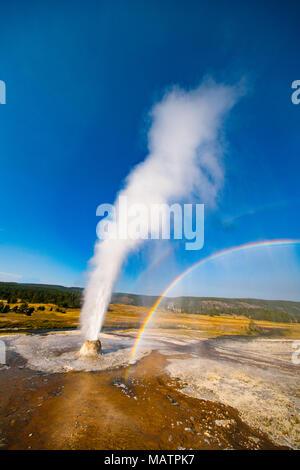 L'éruption du geyser de ruche, arc-en-ciel, et le parc national de Yellowstone, Wyoming, Upper Geyser Basin Photo Stock