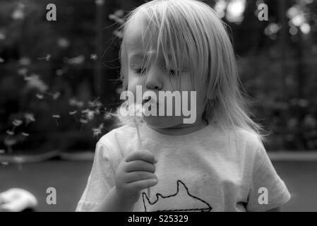Pissenlit souffle de l'enfant Photo Stock