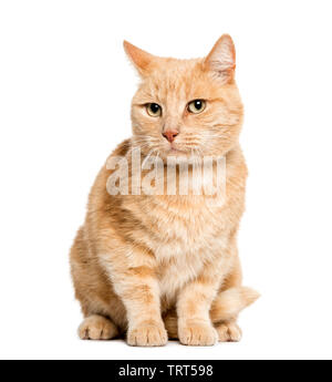 Mixed Race de chat-sitting in front of white background Photo Stock