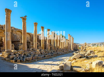 La Jordanie, le Gouvernorat de Jerash, Jerash. La rue à colonnade (cardo maximus) dans l'ancienne ville romaine de Gérasa. Photo Stock