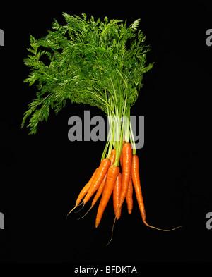 carottes Photo Stock