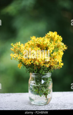Fleur jaune de millepertuis. Photo Stock