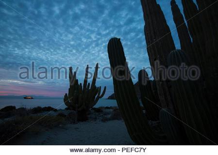 Cactus est le long du bord de l'océan. Photo Stock