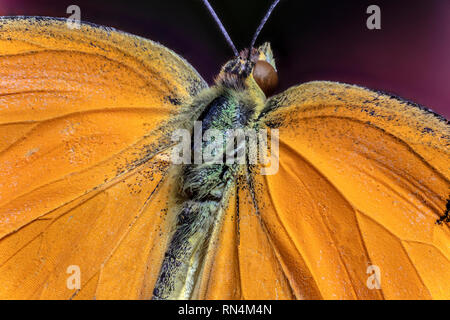 Papillon Orange endormi Photo Stock