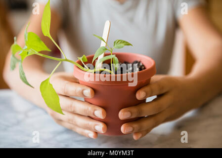 Mains d'African American Woman holding plant Photo Stock