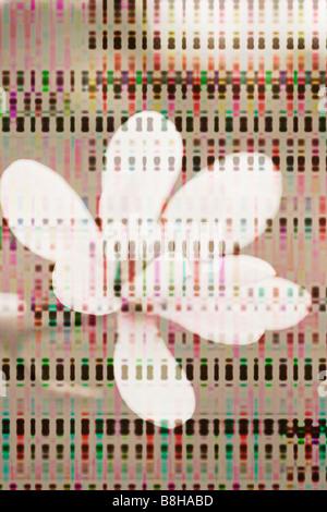 Photo-graphique illustration de fleur de printemps Photo Stock
