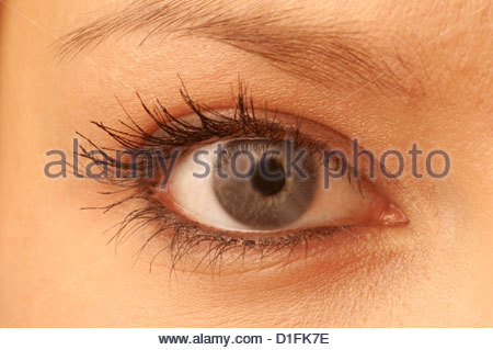 OEIL NORMAL Photo Stock
