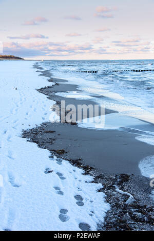Le lever du soleil, Plage, Neige, hiver, balade, mer Baltique, Darss, Zingst, Allemagne Photo Stock