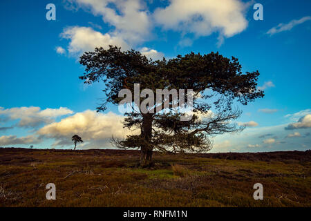 Les Pines, North York Moors, Commondale Photo Stock