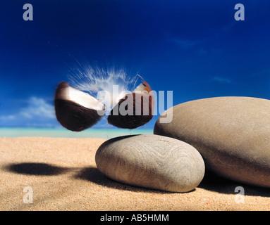 Une noix de coco cassé en deux Photo Stock