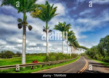 Route bordée de palmiers. Mauai, New York Photo Stock