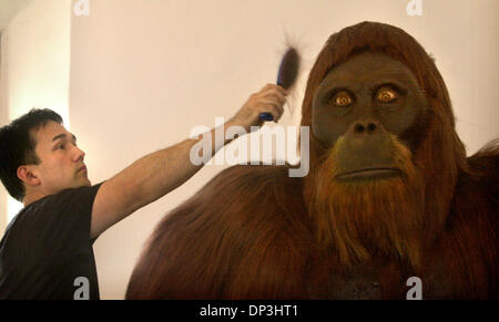 (Publié le 06/18/2003, B-3:1,2; Galerie d'ouverture: 06/23/2003): George York, concepteur du Gigantopithecus replica, mettre la touche finale à sa création, après son installation au Musée de l'homme dans le Parc Balboa, le lundi matin. Le primate fait partie de la nouvelle voie à travers le temps la pièce. Photo Stock