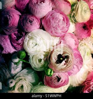Bouquet de pivoines Photo Stock
