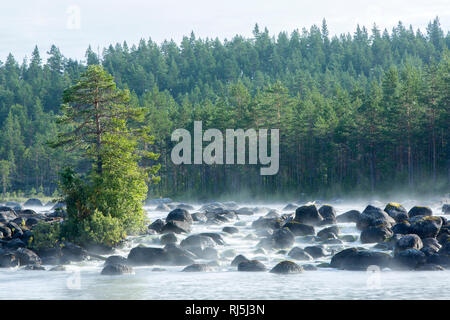 Forest and stream Photo Stock