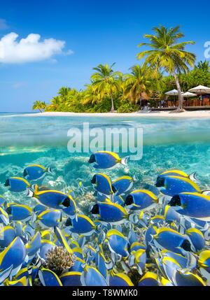 Paysage tropical à l'île des Maldives, Ari Atoll Photo Stock