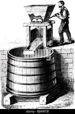 Une gravure représentant l'des raisins pour le vin. France 1870 Photo Stock