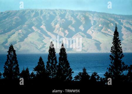 Les pins et vue sur Molokai de Maui, Hawaii Photo Stock