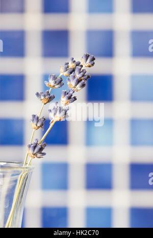 Fleurs de Lavande en vase en verre avec fond bleu. Flower still life. Photo Stock