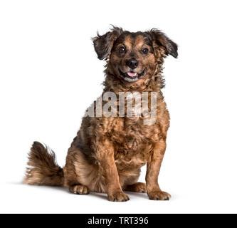 Mixed-breed dog sitting against white background Photo Stock