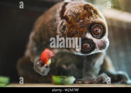 Horloge Malicieuse singe avec yeux globuleux