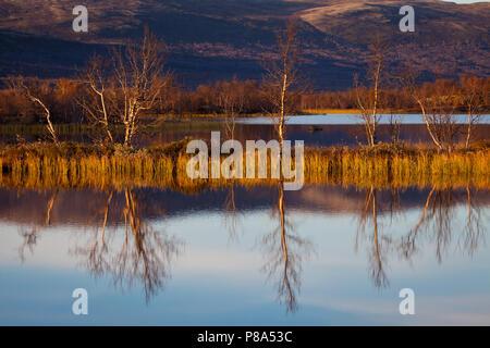 Belle soirée d'automne à Fokstumyra réserve naturelle, Dovre, la Norvège. Photo Stock