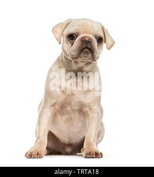 Le PUG, 10 years old, in front of white background Photo Stock