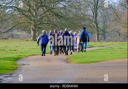 Groupe de cadres les marcheurs, felbrigg estate, North Norfolk, Angleterre Photo Stock