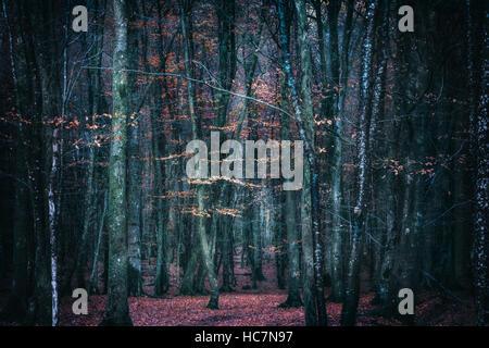 Sombre mystérieuse forêt en automne Photo Stock