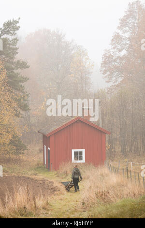 Woman pushing wheelbarrow in field Photo Stock