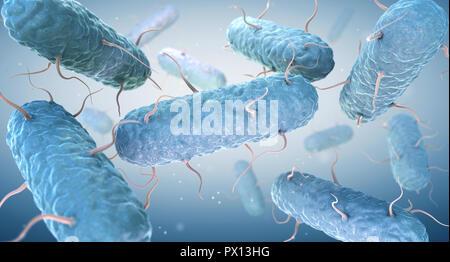 Les entérobactéries. Entérobactéries sont une grande famille de bactéries à Gram négatif. 3D illustration Photo Stock